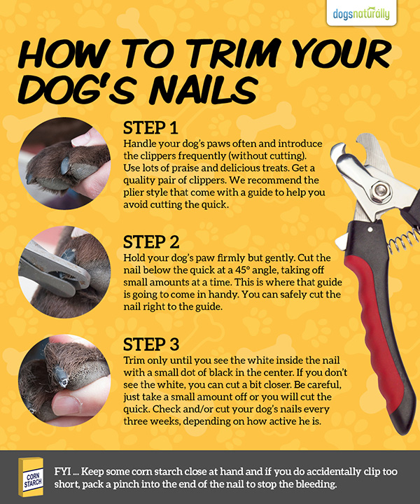 how to put dog to sleep to cut nails