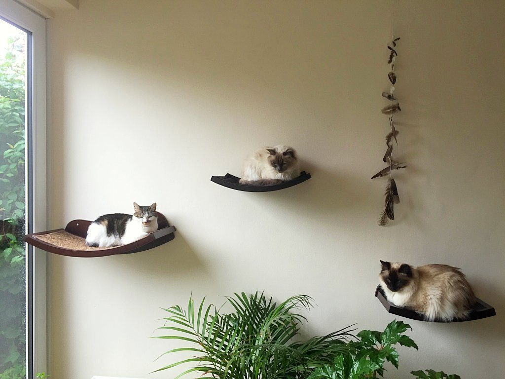 Wall Mounted Cat Shelving Your Cat Will Adore - Pawsify