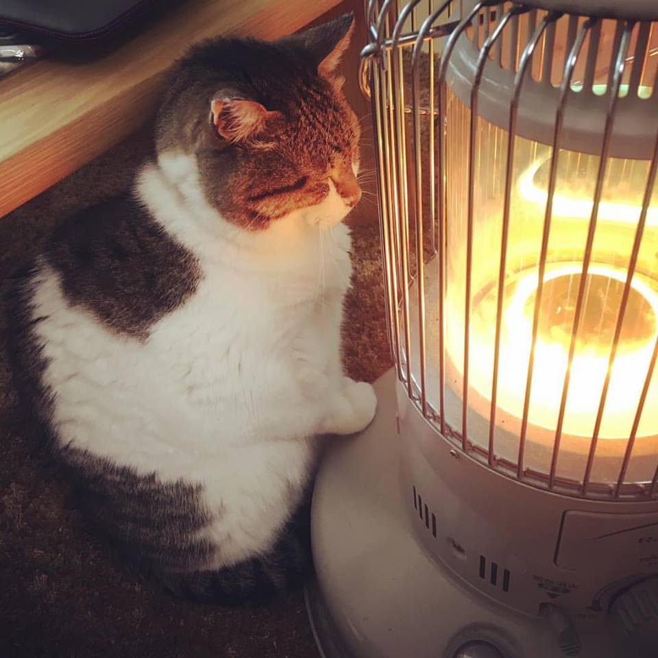 internet melts over this cat falling in love with a heater pawsify